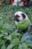 Wordless Wednesday - Pug-inia creeper