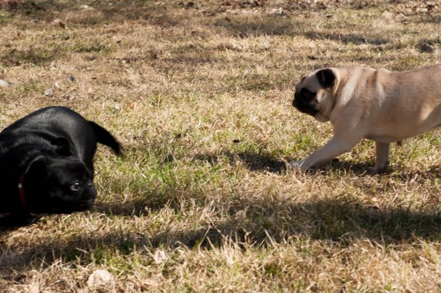 Poppy and Sabrina playing chase
